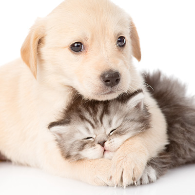 Help us prepare for puppy and kitten season!