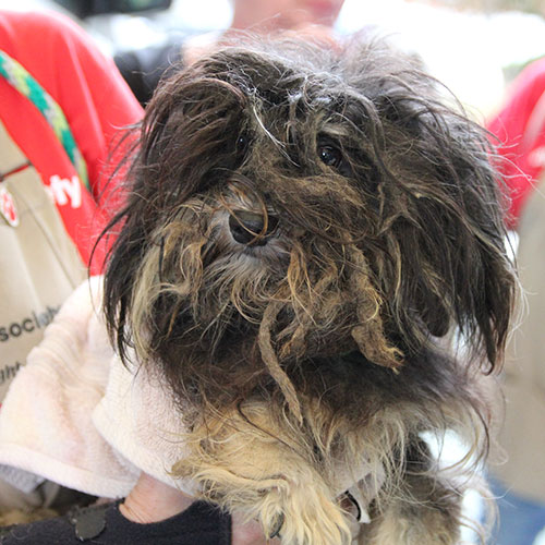 Dog rescued from a puppy mill in Webster County, GA