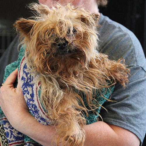 Daisy, dog rescued from a puppy mill in Webster County, GA
