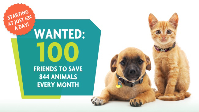Wanted: 100 friends to save 844 animals every month.