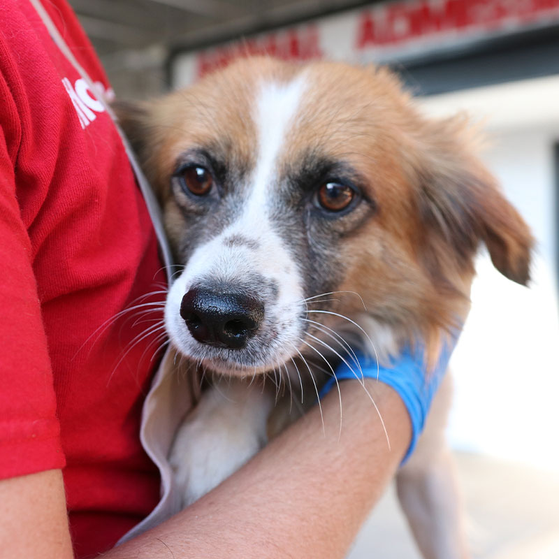 Dog rescued from neglect case arriving at AHS