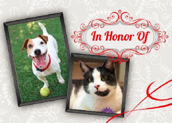 Honor Your Pet With a Heartfelt Donation