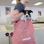 Click here for more information about Adopt Canvas Tote Bag